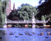 Foot bridge in Public Garden - Boston Public Garden Foot bridge  Boston, MA Travel Photography
